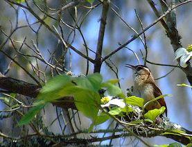 [Image: birdy.JPG]