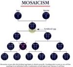 [Image: mosaicism1.jpg]