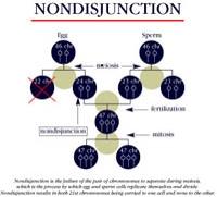 [Image: nondisjunction1.jpg]